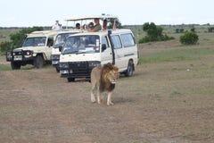 Het bekijken van het spel voertuig in de savanne Stock Fotografie