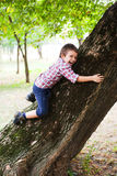 Het beklimmen van boom Royalty-vrije Stock Foto's