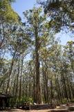 Het beklimmen van de boom van de Branddiamant Stock Afbeelding