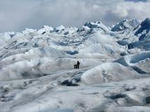 Het beklimmen van de Gletsjer royalty-vrije stock foto