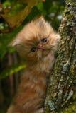 Het beklimmen van kat Stock Afbeelding
