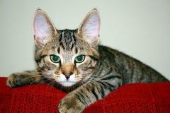 Het beklimmen van katje Stock Foto
