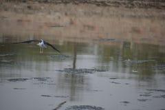 Het belangrijke Vogels braden stock foto