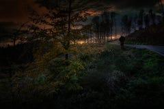 Het benieuwd zijn door het hout van Medvednica-berg in Kroatië Royalty-vrije Stock Fotografie