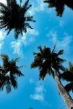 Het bereiken van de hemel zonder het realiseren stock afbeeldingen