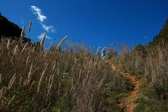 Het berglandschap stock afbeeldingen