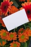 Het bericht van de bloem Stock Foto
