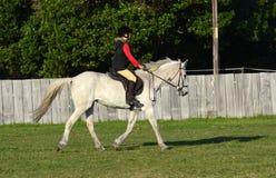 Het berijden het draven op grijs paard Royalty-vrije Stock Foto's