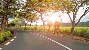Het berijden langs een weg met bloeiende bomen stock footage