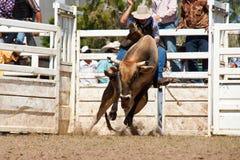 Het berijden van de cowboy gevaarlijke stier op rodeo Stock Fotografie