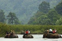 Het berijden van de olifant Stock Afbeeldingen