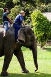 Het berijden van de olifant Stock Fotografie