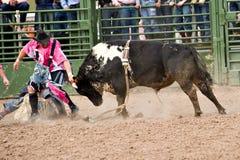 Het berijden van de stier Stock Fotografie