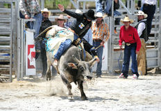 Het Berijden van de Stier van de rodeo Stock Afbeelding