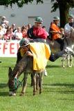 Het berijden van een ezelswedstrijd Royalty-vrije Stock Foto