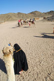 Het berijden van een kameel in Egypte Stock Afbeelding