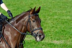 Het berijden van een paard Stock Afbeelding