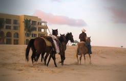 Het berijden van paarden in Los Cabos, Mexico Royalty-vrije Stock Afbeeldingen