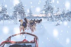 Het berijden van schor slee in het landschap van Lapland royalty-vrije stock fotografie