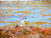 Het berijden van het zeewier stock fotografie