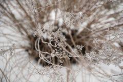 Het berijpen op bevroren takjes Stock Foto