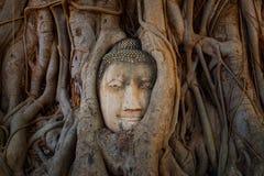 Het beroemde Hoofd van Boedha met Banyan-Boomwortel in Wat Mahathat Temple in het Historische Park van Ayuthaya Royalty-vrije Stock Foto