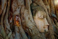 Het beroemde Hoofd van Boedha met Banyan-Boomwortel in Wat Mahathat Temple in het Historische Park van Ayuthaya Stock Afbeelding