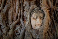 Het beroemde Hoofd van Boedha met Banyan-Boomwortel in Wat Mahathat Temple in het Historische Park van Ayuthaya Royalty-vrije Stock Afbeeldingen