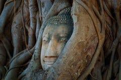 Het beroemde Hoofd van Boedha met Banyan-Boomwortel in Wat Mahathat Temple in het Historische Park van Ayuthaya Stock Fotografie