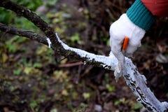 Het beschermen van bomen tegen de winter koude maanden stock foto