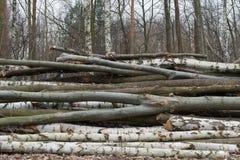 Het besnoeiingshout opent bos het programma royalty-vrije stock fotografie