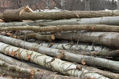 Het besnoeiingshout opent bos het programma stock foto