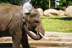 Het bespattende water van de olifant Stock Foto's