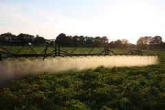 Het bespuiten potatofield Stock Foto