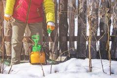 Het bespuiten van fruitbomen in de recente winter van ongedierte en insecten stock afbeelding