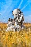 Het beste hondvrienden spelen Royalty-vrije Stock Fotografie