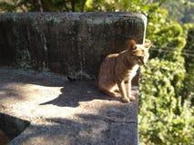 Het beste stelt van kat royalty-vrije stock afbeeldingen