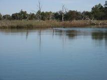 Het beste zwemmen door zoutwaterrivier naar moeras in Charleston South Carolina Royalty-vrije Stock Afbeelding