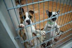Het bestrijden van honden in een kooi stock afbeelding