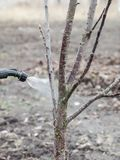 Het bestrooien van bomen met fungicide stock fotografie