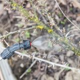 Het bestrooien van kruisbes met fungicide stock fotografie