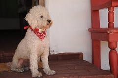 Het betalen aandacht van een hond in de portiek Royalty-vrije Stock Afbeelding