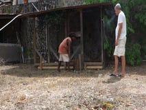 Het bevestigen van een hondpen in de Caraïben stock videobeelden