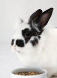 Het bevlekte konijn eet voedsel stock fotografie
