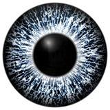 Het bevroren 3d blauwe en zwarte oog van de oogtextuur, zwarte rand Royalty-vrije Stock Afbeeldingen