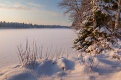 Het bevroren de wintermeer in hout onder sneeuw Stock Afbeelding