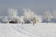 Het bevroren Landschap van de Winterbomen Stock Afbeeldingen