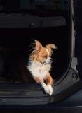 Het bewaken van de auto Stock Afbeeldingen