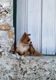 Het bewaken van de deur Stock Afbeelding