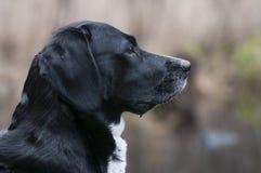 Het bewaken van hond Royalty-vrije Stock Afbeeldingen